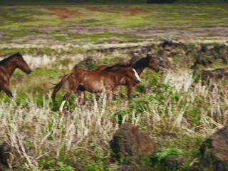 Voglia di Silversea Wild Expeditions